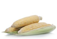 Corns Stock Photography