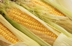 Corns Royalty Free Stock Photos