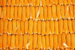corns fotografia de stock