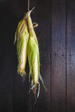 corns Lizenzfreies Stockfoto