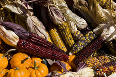 Corns And Pumpkins Stock Photography