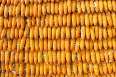Corns for animal feeding. Industry Royalty Free Stock Image