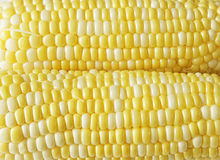 Corns Background Royalty Free Stock Images