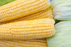 Corns backgrounds Stock Image