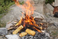 Corns being grilled in the Himalayas mountain Royalty Free Stock Images
