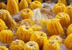 Corns  boil Royalty Free Stock Photo