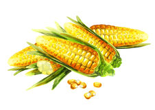 Corns composition. Watercolor royalty free stock photography