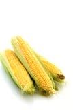 Corns isolated Royalty Free Stock Photos