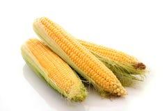 corns isolated on white Royalty Free Stock Image