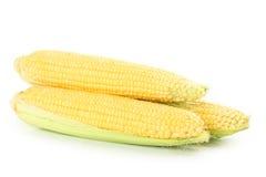 Corns Royalty Free Stock Photos