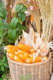 Corns in rattan basket Stock Image