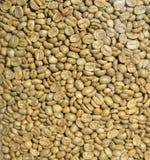 Corns before roast Stock Image