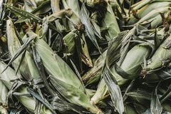 Corns With Skins Royalty Free Stock Photo