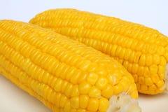 A corns vegetable food. Stock Image