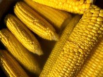 corns vegetais Milho de solda em casa imagens de stock royalty free