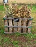 cornstalks πώληση στοκ εικόνες