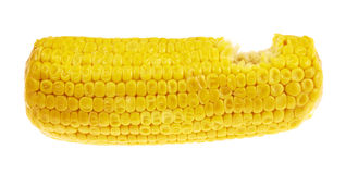 Cornstick corn on the cob isolated Stock Photography