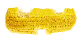 Cornstick corn on the cob isolated Royalty Free Stock Image