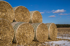 Cornstock bales. Royalty Free Stock Images