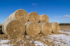 Cornstock bales. The rolled cornstalk bales on the Midwestern farmland Royalty Free Stock Image