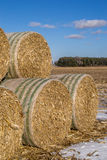 Cornstock bales. The rolled cornstalk bales on the Midwestern farmland Stock Images