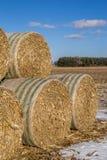 Cornstock bales. Stock Images