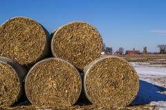 Cornstock bales. The rolled cornstalk bales on the Midwestern farmland Stock Photo