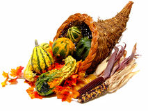Cornucopia. A harvest or thanksgiving cornucopia filled with gourdes, dried corn and colorful autumn leaves Royalty Free Stock Images