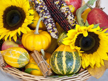 Cornucopia. Autumn harvest produce displayed in a basket stock image