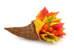 Cornucopia with colorful leaves Royalty Free Stock Images