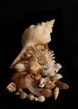 Cornucopia del mar 2 Fotografía de archivo