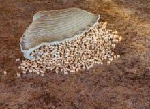 Cornucopia dispersada de las pelotillas del pino Fotografía de archivo
