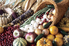Cornucopia of fall bounty and color. Stock Photos