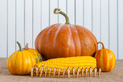Cornucopia of Fall Pumpkins, Gourds, and Corn Royalty Free Stock Image