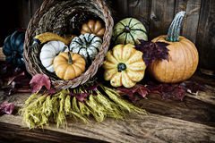 Cornucopia For Thanksgiving Stock Photography