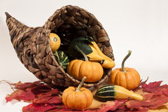 Cornucopia & Gourds Stock Photo