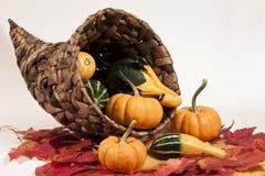 Cornucopia & Gourds. A cornucopia with gourds and mini pumpkins on leaves Stock Photo