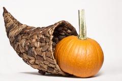 Cornucopia & Gourds. An arrangement of gourds with a cornucopia basket Stock Photography