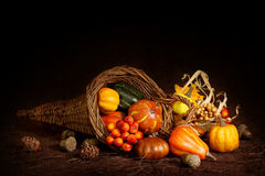Cornucopia with pumpkins Royalty Free Stock Photography