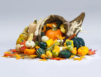 Cornucopia of Thanksgiving. A cornucopia is overflowing with an abundant bounty of pumpkins, gourds, squash, and Indian corn with wheat and colorful fall leaves Stock Image