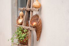 Cornucupia with apple, gourds and plants Stock Image