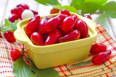Cornus. Cornelian berries Stock Photos