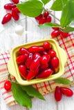 Cornus. Cornelian berries Royalty Free Stock Image
