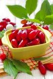 Cornus. Cornelian berries Royalty Free Stock Photo