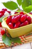Cornus. Cornelian berries Stock Images