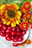 Cornus e flores na bacia fotografia de stock royalty free