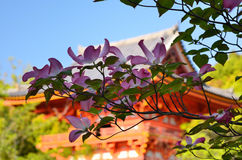 Cornus japonês do  do garden〠Foto de Stock Royalty Free