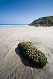 Cornwall Beach Royalty Free Stock Photography