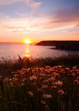 Cornwall Cliffside Sunset Stock Photo