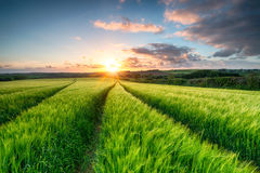 Cornwall Countryside Stock Photography